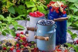 Экология. Сезон заготовки ягод: приятное с полезным