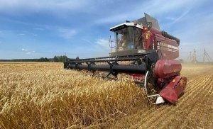 Шестой миллион тонн зерна впереди. Аграрии Беларуси приближаются к очередной значимой цифре